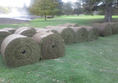 Big Roll Sod