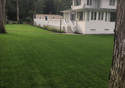 Sod & Seed Sod Install After